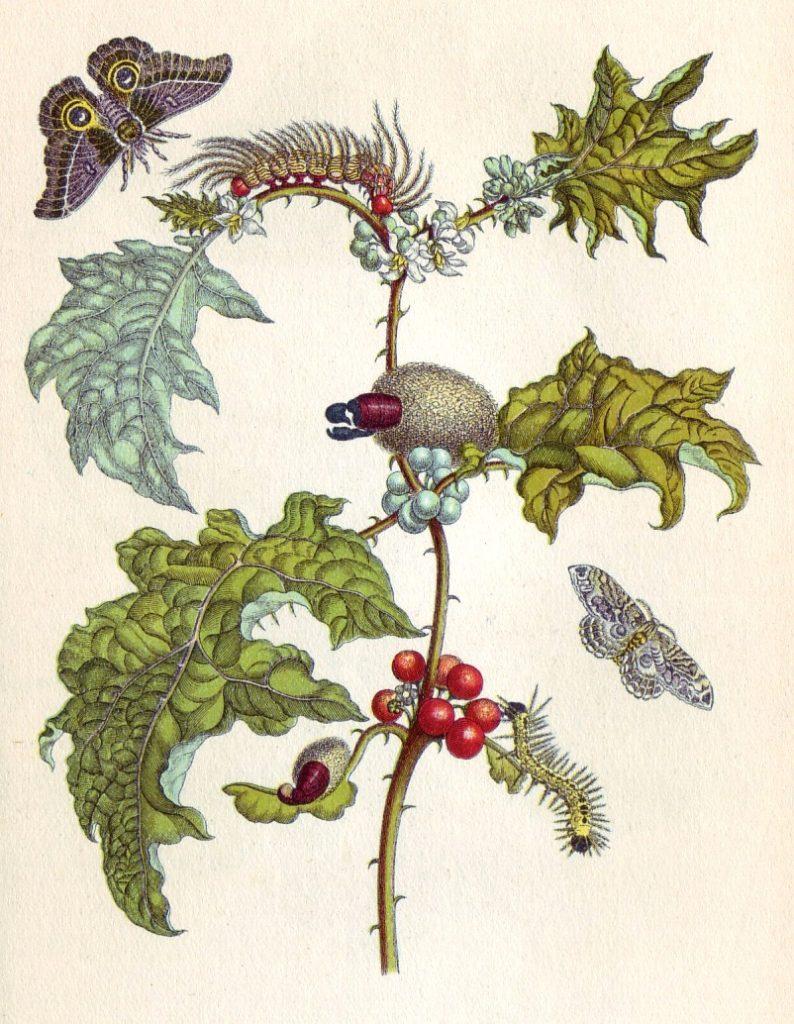 Gravure représentant des plantes et des insectes