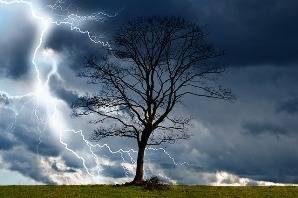 Photographie d'un arbre sous l'orage