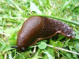 photographie de limace
