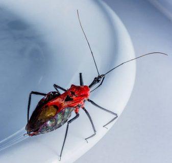 Image numérique d'un insecte sur le bord d'une assiette