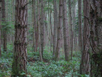 Forest on San Juan Island