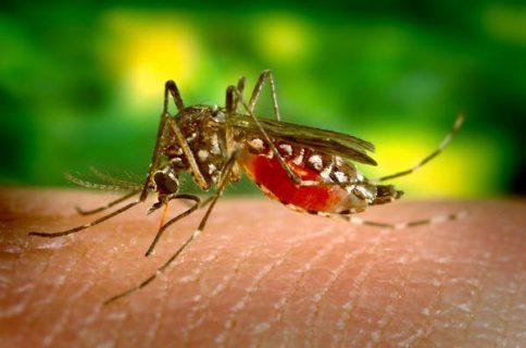 moustique sur la peau d'une personne
