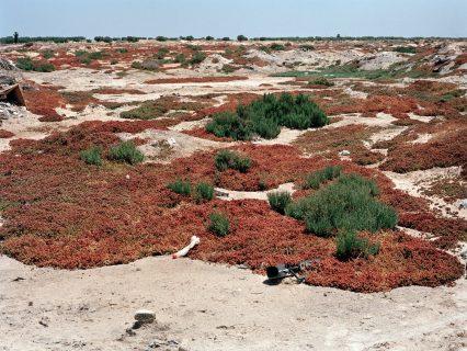 La végétation recouvre le lieu d'une fosse commune
