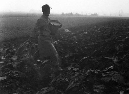 champ, photographie noir et blanc