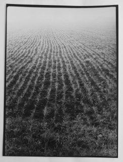 sillons photographie noir et blanc