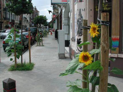 Des tournesols plantés sur le trottoirs