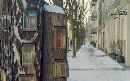 Bibliothèque creusée dans un arbre à Berlin