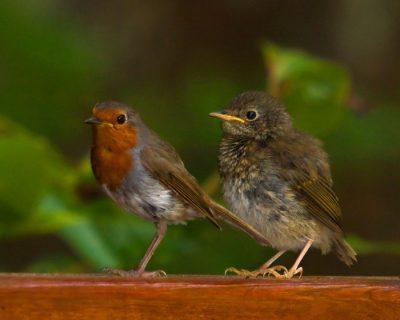 Photographies de deux oiseaux