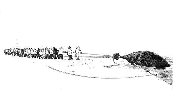 Dessin d'une baleine tirée de l'eau par les chasseurs
