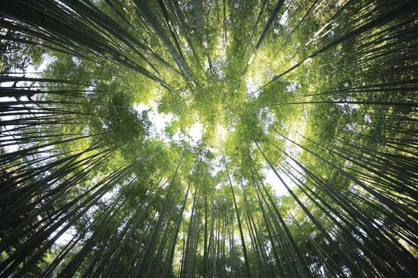 photographie d'arbres