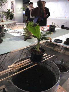 Image d'une plante de l'installation