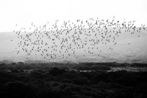 Une nuée d'oiseaux en vol