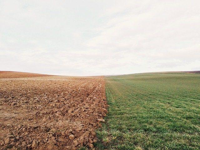 champs coupé en deux, à gauche terre, à droite herbe