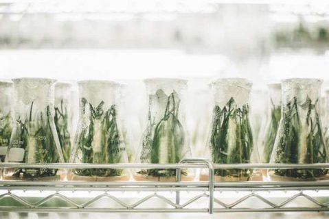 Plantes dans des flacons de laboratoires