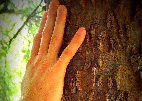 La main d'un homme posée sur le tronc d'un arbre