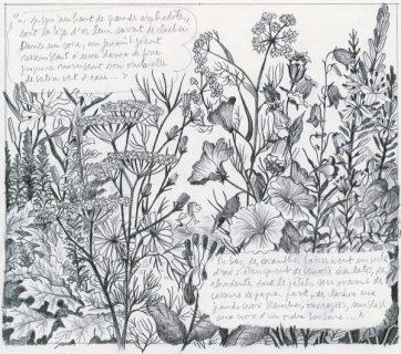 Un enchevêtrement de fleurs des champs précisément dessiné au crayon à papier, comme un herbier.