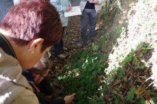 Groupe observant les végétaux