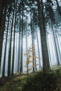 Jeune pousse dans la forêtforêt